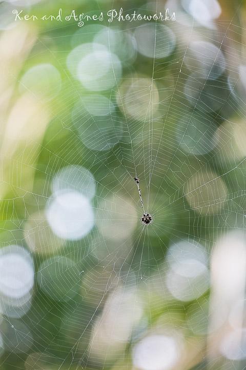 Spider Web Bokeh KAP